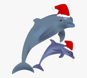 dolfijn kerst