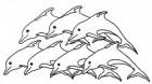 """Watervrienden """"De Flippers"""""""